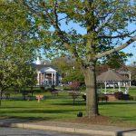 town-common-trees
